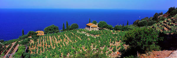 Elba Photograph - High Angle View Of Vineyard, Chiessi by Panoramic Images