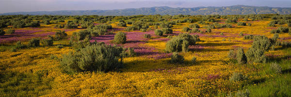 Santa Rosa Photograph - High Angle View Of Wildflowers In A by Panoramic Images