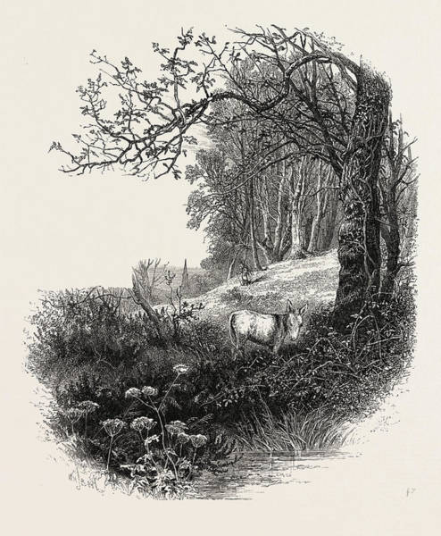 Epping Wall Art - Drawing - High Beech, Epping Forest, The Forest Scenery Of Great by English School
