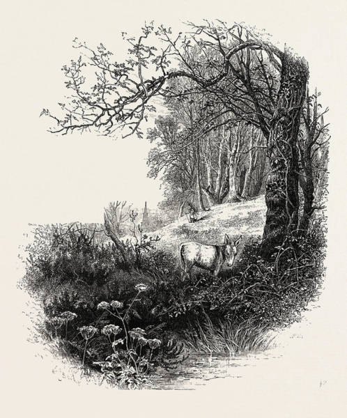 Epping Wall Art - Drawing - High Beech, Epping Forest, Uk, Britain, British by English School