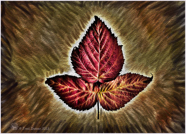Photograph - High Bush Cranberry Leaf by Fred Denner