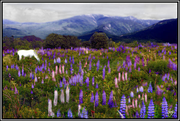 Photograph - High Country Lupine Dreams by Wayne King