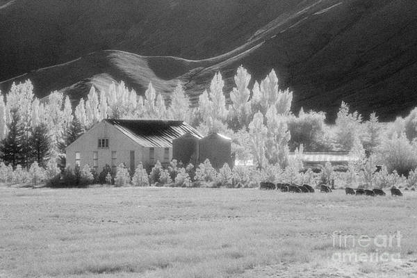 Black Sheep Photograph - High Country Station by Colin and Linda McKie