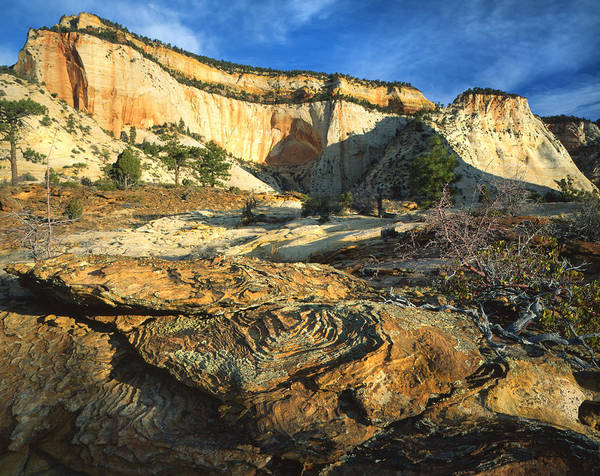 Photograph - High Country Zion by Ray Mathis
