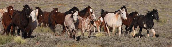 Photograph - High Desert Horses by Diane Bohna