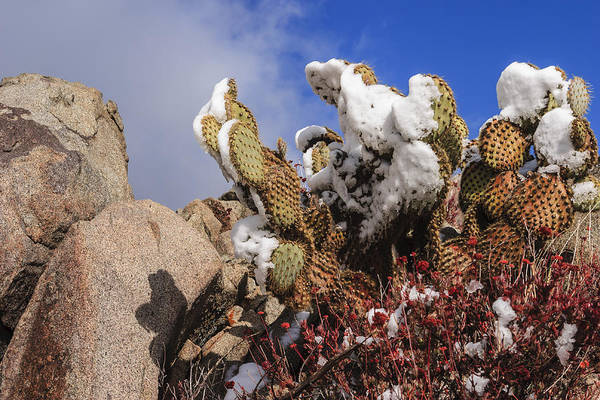 Photograph - High Desert Snow 1 by Scott Campbell