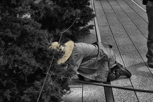 Photograph - High Line And The Gardener Black And White by Evie Carrier