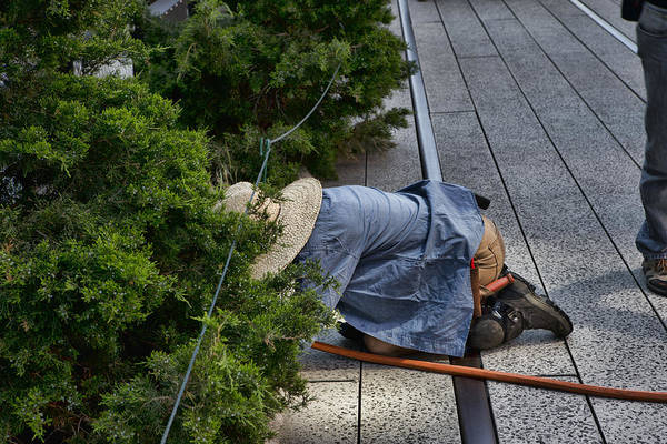 Photograph - High Line And The Gardener by Evie Carrier