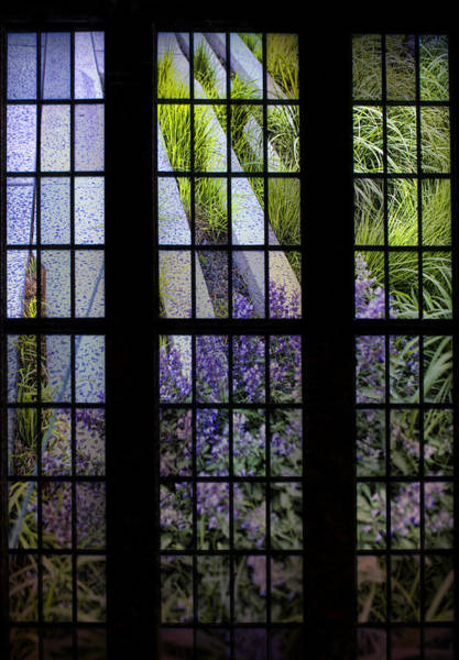 Photograph - High Line Lavender by Evie Carrier