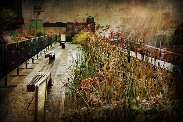 Photograph - High Line Park In The Rain New York by Evie Carrier