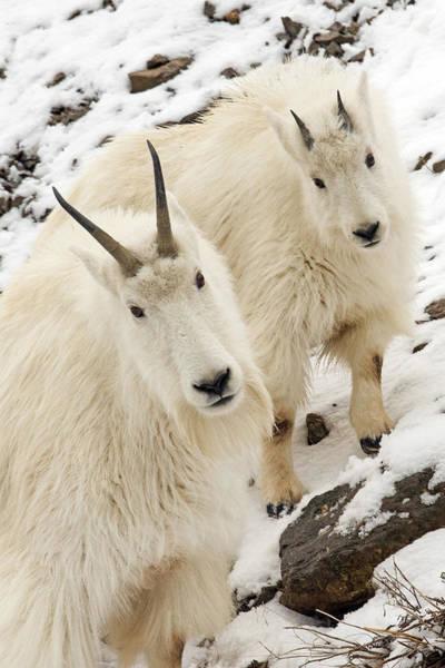 Goat Rocks Photograph - High Mountain Family by Sandy Sisti