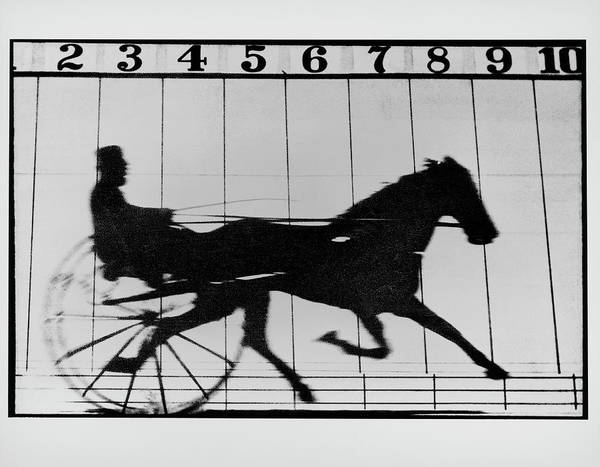 Trot Wall Art - Photograph - High-speed Photo Of A Trotting Horse Pulling Cart by Eadweard Muybridge Collection/ Kingston Museum/science Photo Library