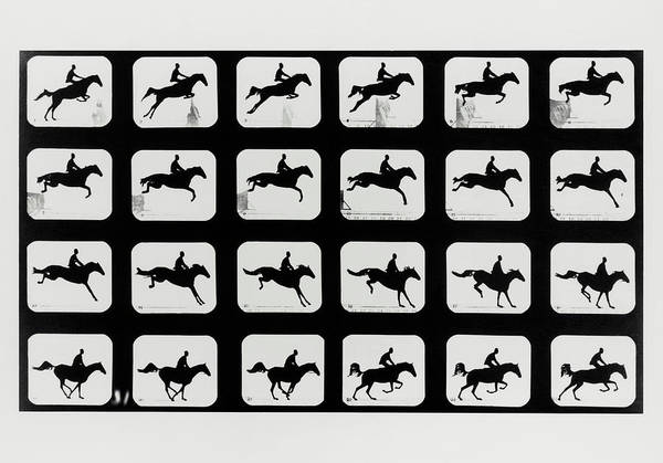 Sequence Photograph - High-speed Sequence Of A Silhouetted Jumping Horse by Eadweard Muybridge Collection/ Kingston Museum/science Photo Library