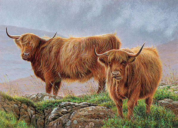 Terrain Digital Art - Highland Cattle In Rugged Moorland by Andrew Hutchinson
