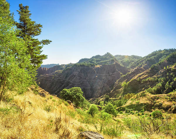 Coniferous Tree Photograph - Highlands Of Santo Antao  Capo Verde by Cinoby