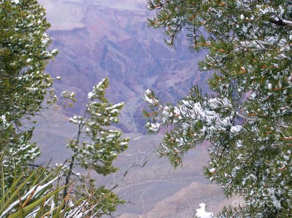 Photograph - Highlighting Snow by Roberta Byram