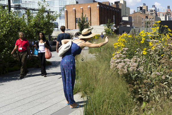 Photograph - Highline Daisy Shoot by Frank Winters