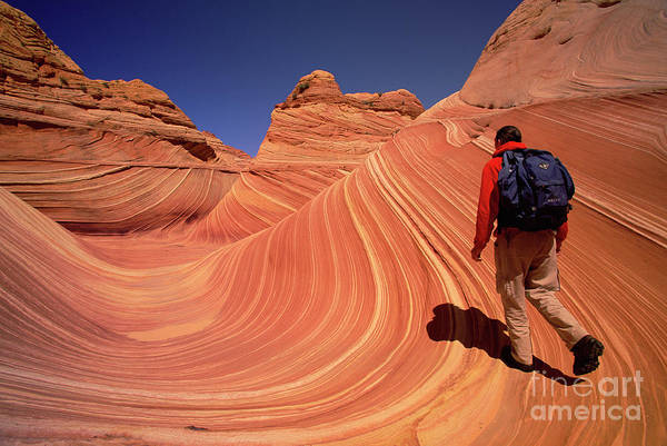 Wall Art - Photograph - Hiker On Petrified Dunes by Yva Momatiuk John Eastcott