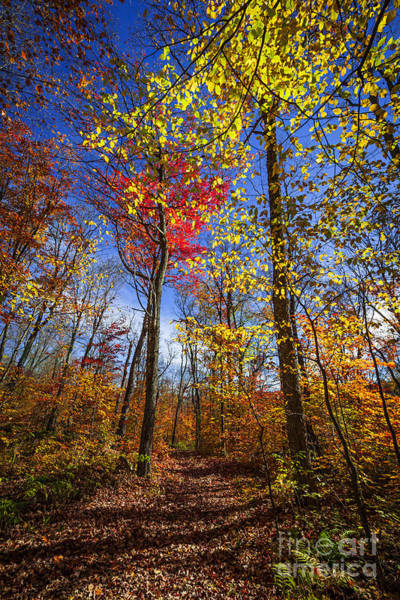 Wall Art - Photograph - Hiking Trail In Fall Forest by Elena Elisseeva
