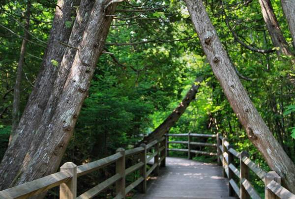 Photograph - Hiking Trail In Tahquamenon Falls State Park by Dan Sproul