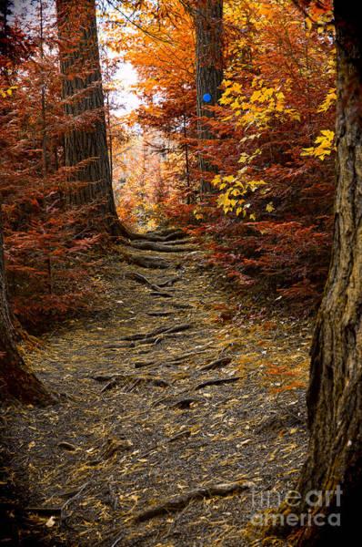 Photograph - Hiking Trail by Les Palenik