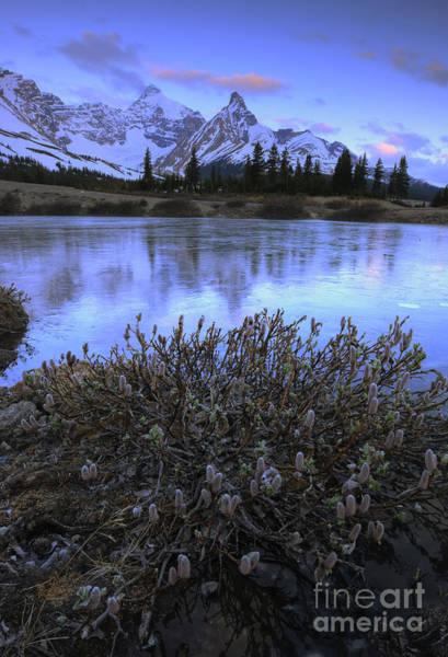 Photograph - Hilda Peak Sunrise by Dan Jurak