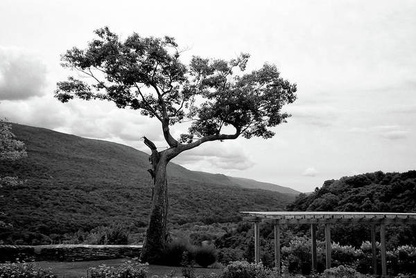 Hildene Tree 5689 Art Print