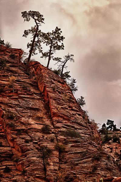 Wall Art - Photograph - Hill Climbing Trees  by Juan Carlos Diaz Parra