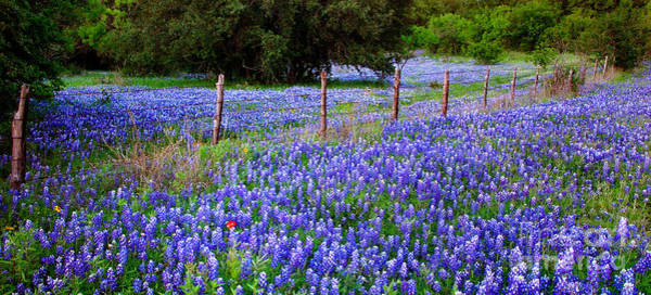 Pasture Wall Art - Photograph - Hill Country Heaven - Texas Bluebonnets Wildflowers Landscape Fence Flowers by Jon Holiday