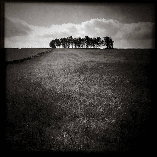 Iphoneography Wall Art - Photograph - Hilltop Copse by Dave Bowman
