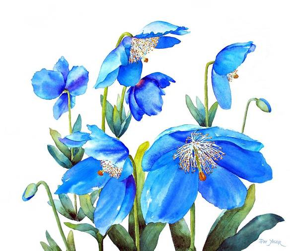 Wall Art - Photograph - Himalayan Blue Poppies by Pat Yager