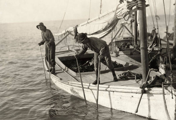 Photograph - Hine Oyster Fishing, 1911 by Granger