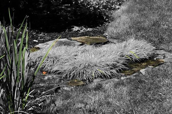Photograph - Hint Of Green Grass by David Yocum