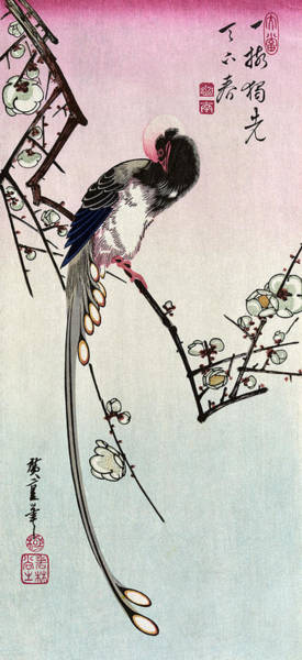 Wall Art - Painting - Hiroshige Magpie, C1840 by Granger