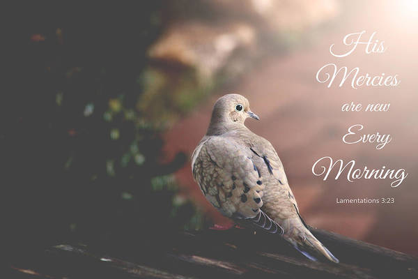Photograph - His Mercies Are New by Trina  Ansel