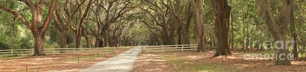 Photograph - Historic Plantation Road by Adam Jewell