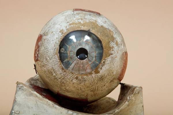 Wall Art - Photograph - Historical Anatomical Eye Model by Mark Thomas/science Photo Library