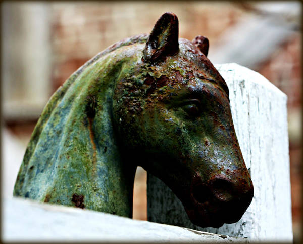 Photograph - Hitching Post by Susie Weaver