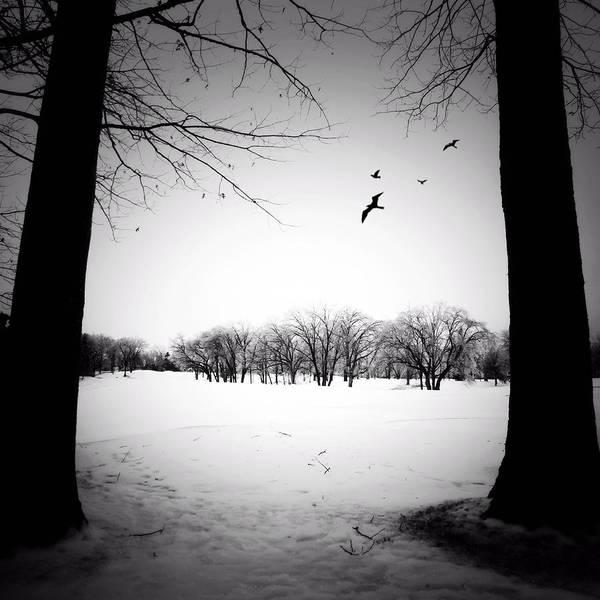 Photograph - Hiver by Natasha Marco