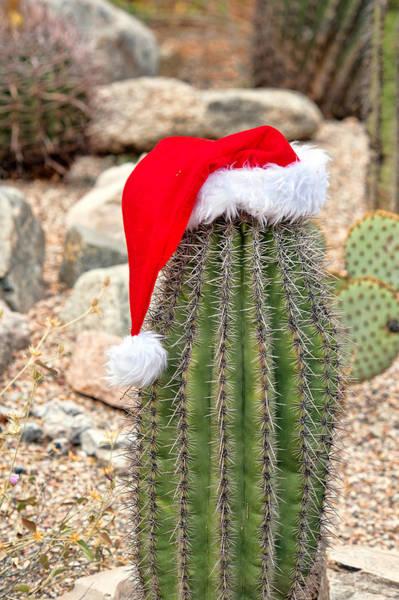 Photograph - Ho Ho Ho Arizona Style by Dan McManus