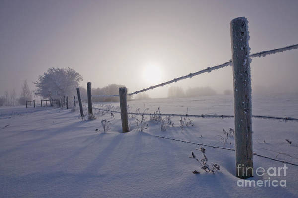 Photograph - Hoar Frost And Barbed Wire Fence by Dan Jurak