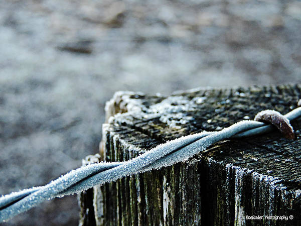 Rader Photograph - Hoar Frost At Sun Up by Roe Rader