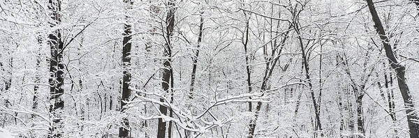 Brown County State Park Photograph - Hoar Frost Covered Trees In Forest by Panoramic Images