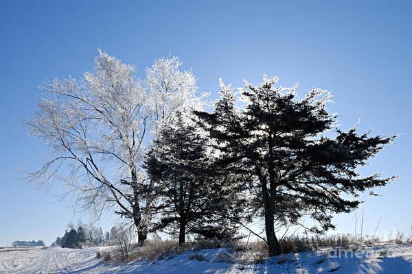Photograph - Hoar Frost by Larry Ricker
