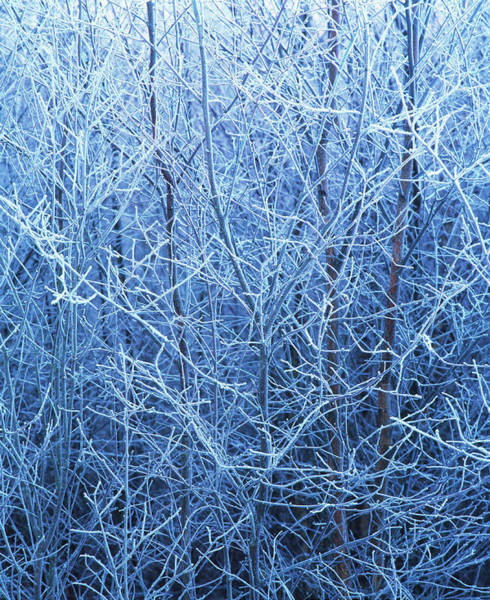 Hoar Photograph - Hoar Frost by Simon Fraser/science Photo Library