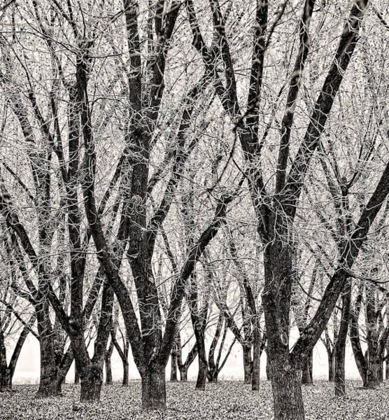 Photograph - Hoarfrost Orchard by Britt Runyon