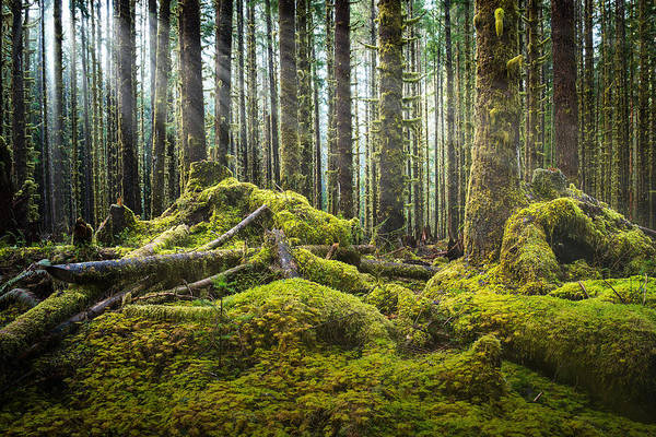 Olympic Peninsula Photograph - Hoh Rainforest Log Jam by Dan Mihai
