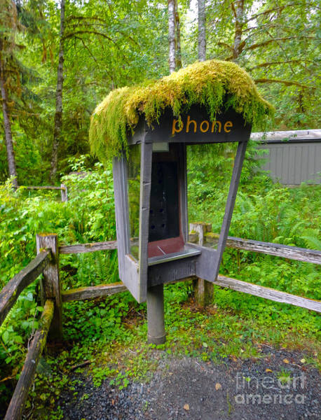 Photograph - Hoh Rainforest - Moss Phone by Gregory Dyer
