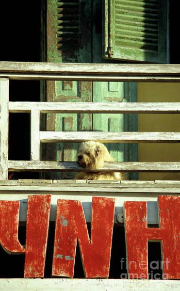 Hoi An Photograph - Hoi An Dog 01 by Rick Piper Photography
