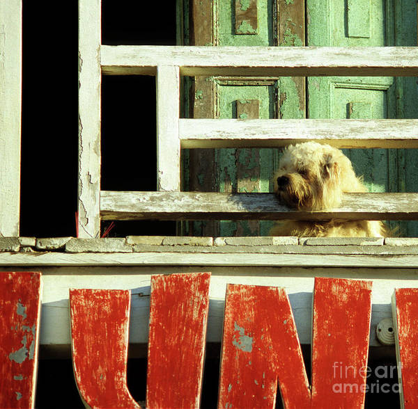 Hoi An Photograph - Hoi An Dog 02 by Rick Piper Photography